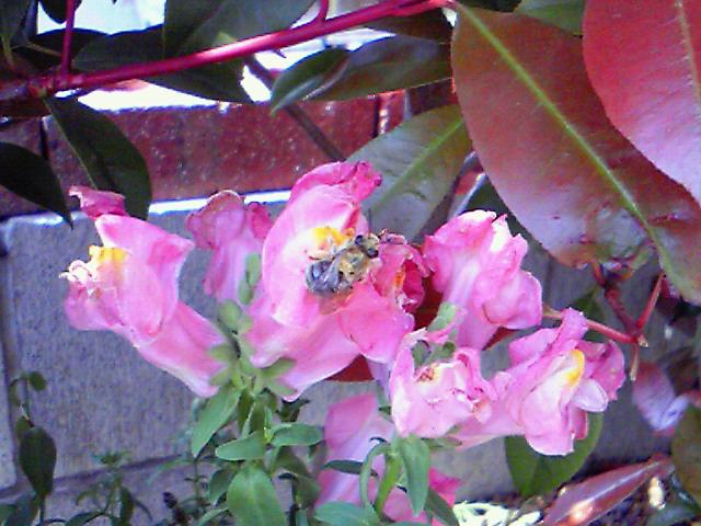 ミツバチ2.jpg